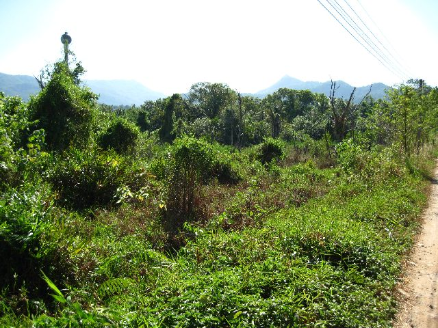 land-is-overgrown