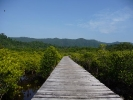 Still one of my favourite views on Koh Chang. Salakphet mangrove walkway in January.