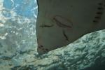 Chantaburi aquarium