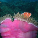 koh-chang-scuba-diving-oct09-01