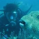 koh-chang-scuba-diving-oct09-15