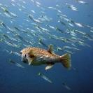 koh-chang-scuba-diving-oct09-18