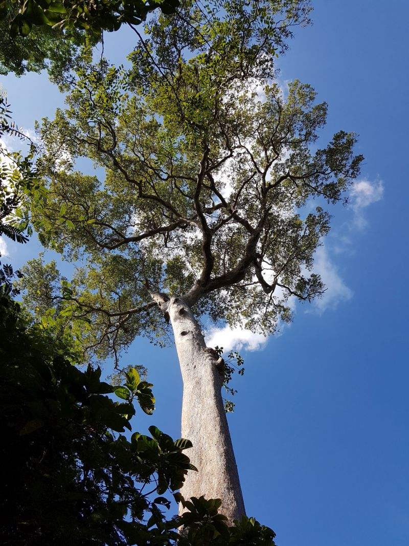 Chai Chet Jungle Walk