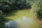 croc pond?