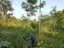 Some dense undergrowth