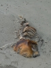 dead-dolphin2-01