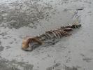 dead-dolphin2-03