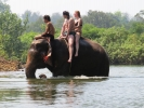 Elephants bath time