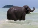 Kai Bae elephants