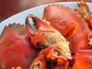 crab-farm-13