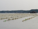 crab-farm-20