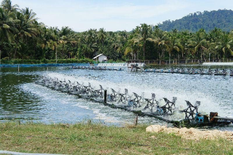 Salakphet prawn farm