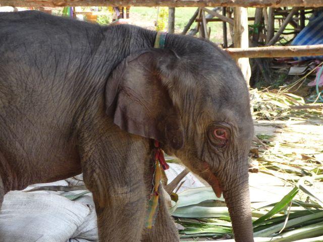 baby-elephant-jan10-05
