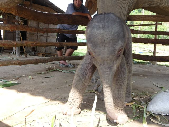baby-elephant-jan2010-01