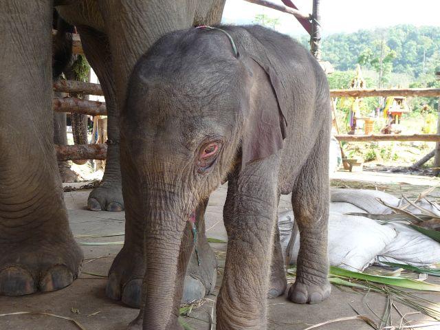 baby-elephant-jan2010-07