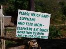 baby-elephant-jan10-02