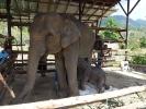baby-elephant-jan2010-02