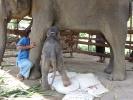 baby-elephant-jan2010-03