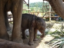 baby-elephant-jan2010-05