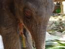 baby-elephant-jan2010-06