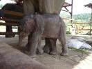 baby-elephant-jan2010-08