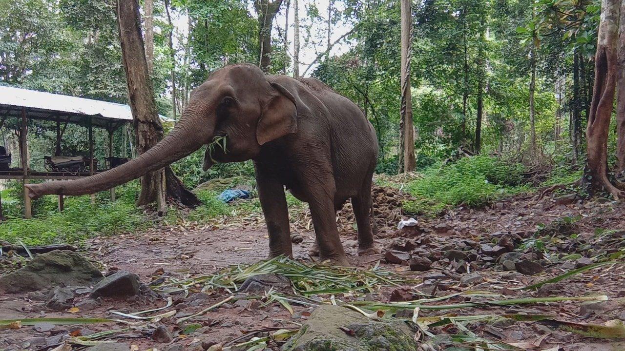 Klong Son Elephant Camp, Koh Chang