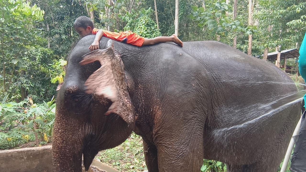 Klong Son Elephant Camp