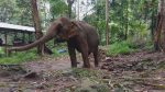 Klong Son Elephant Camp, Koh Chang