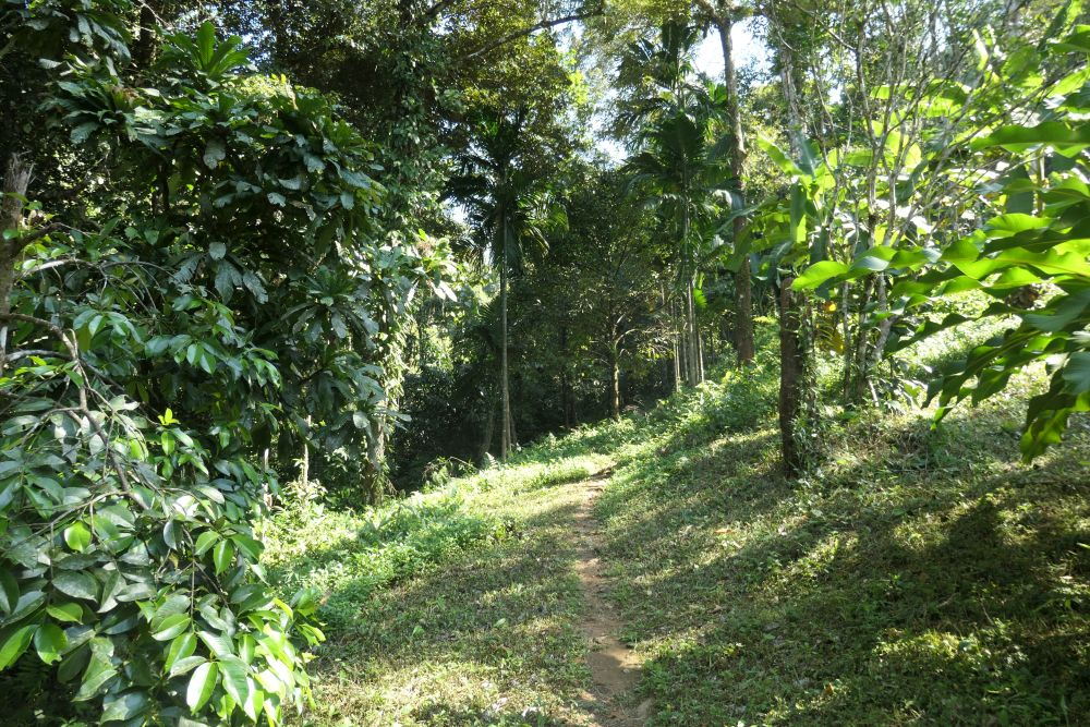 Trail past the bungalows