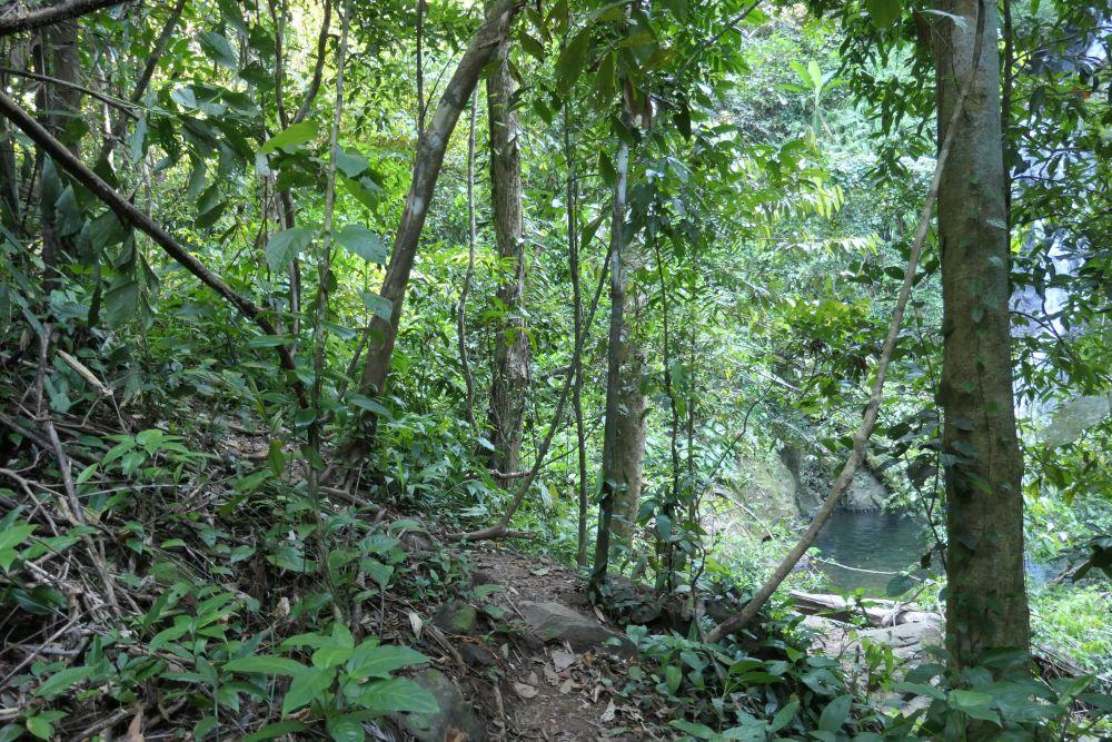 Trail near the waterfall