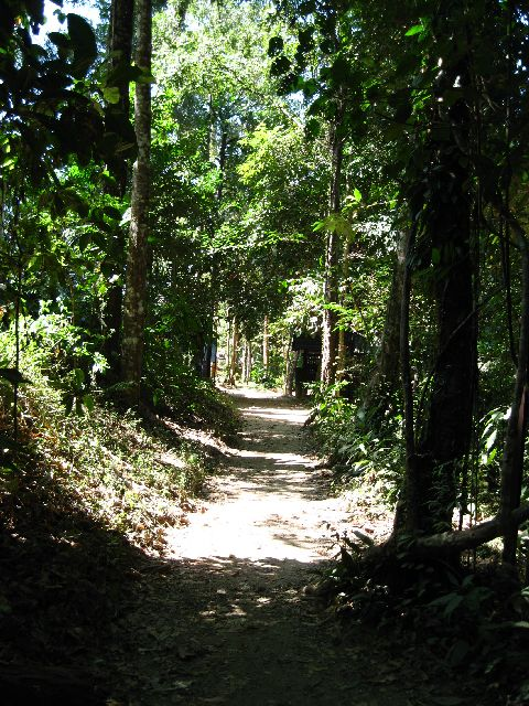 Trail to the waterfall