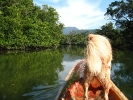 koh-chang-river-kayak06