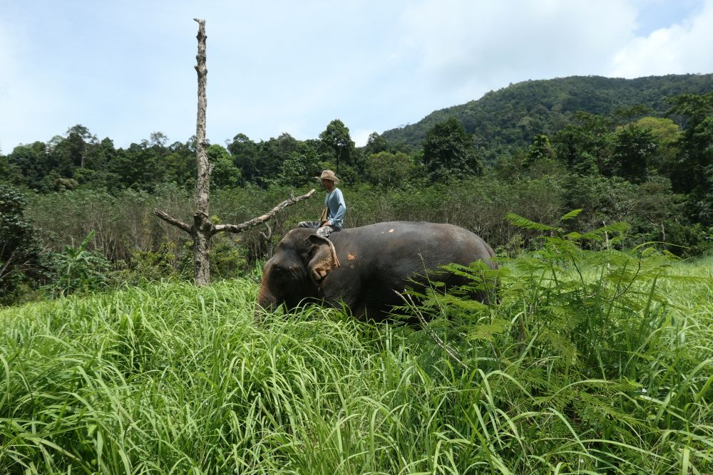 Baan Kwan Chang Elephant camp