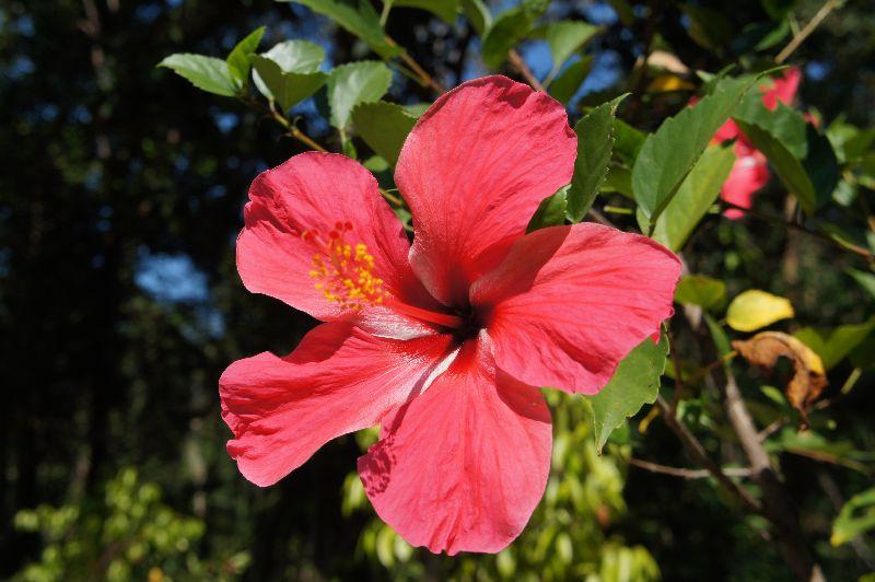 Flower on Koh Kood