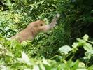 monkey6