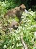 monkey8