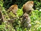 monkeys1a