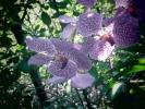 Baan Rim Nam Orchids