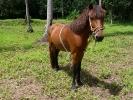 pony-horses-centre-01