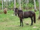 pony-horses-centre-03