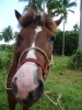 pony-horses-centre-04