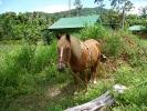 pony-horses-centre-10