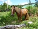 pony-horses-centre-11