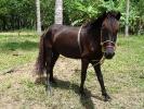 pony-horses-centre-12