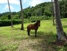 pony-horses-centre-13