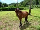 pony-horses-centre-14