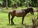 pony-horses-centre-15