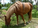 pony-centre-koh-chang-01