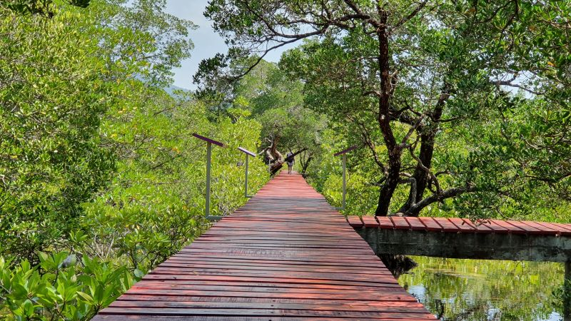 Salakphet Mangrove Walkway - The Red Bridge