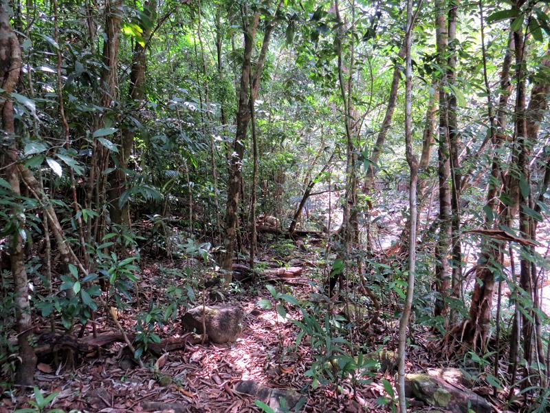 Path again